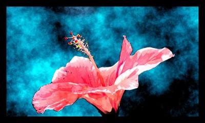 Hibiscus Majestic Paper Print(30 inch X 49 inch)