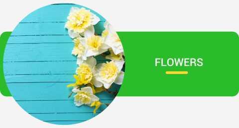 Gardening Store Buy Garden Supply Online At Best Prices In India Flipkart Com