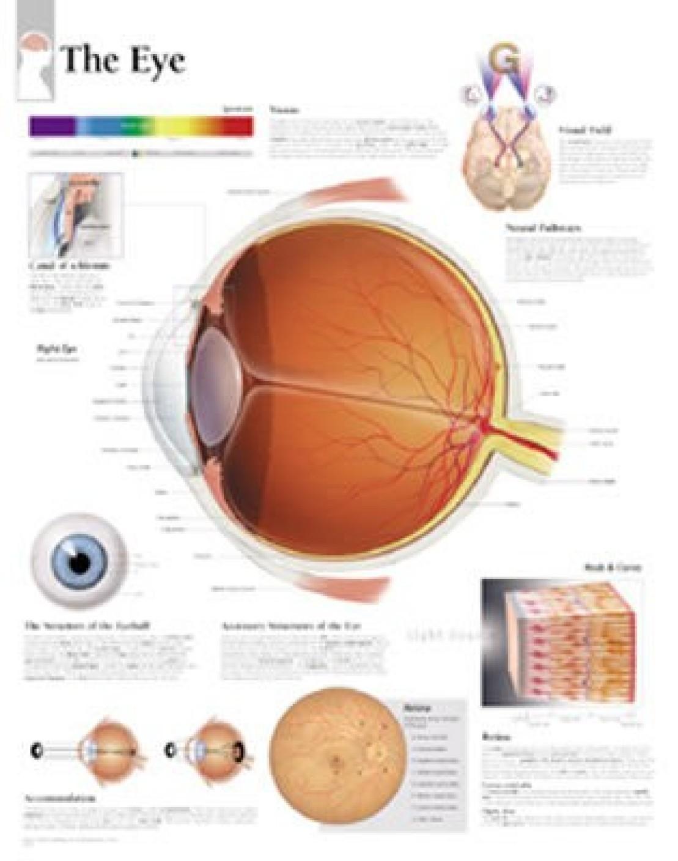 The eye chart laminated wall chart buy the eye chart laminated the eye chart laminated wall chart share nvjuhfo Choice Image
