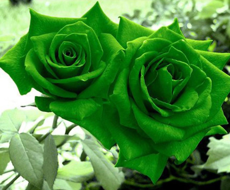Natural Green Lawn Care Reviews