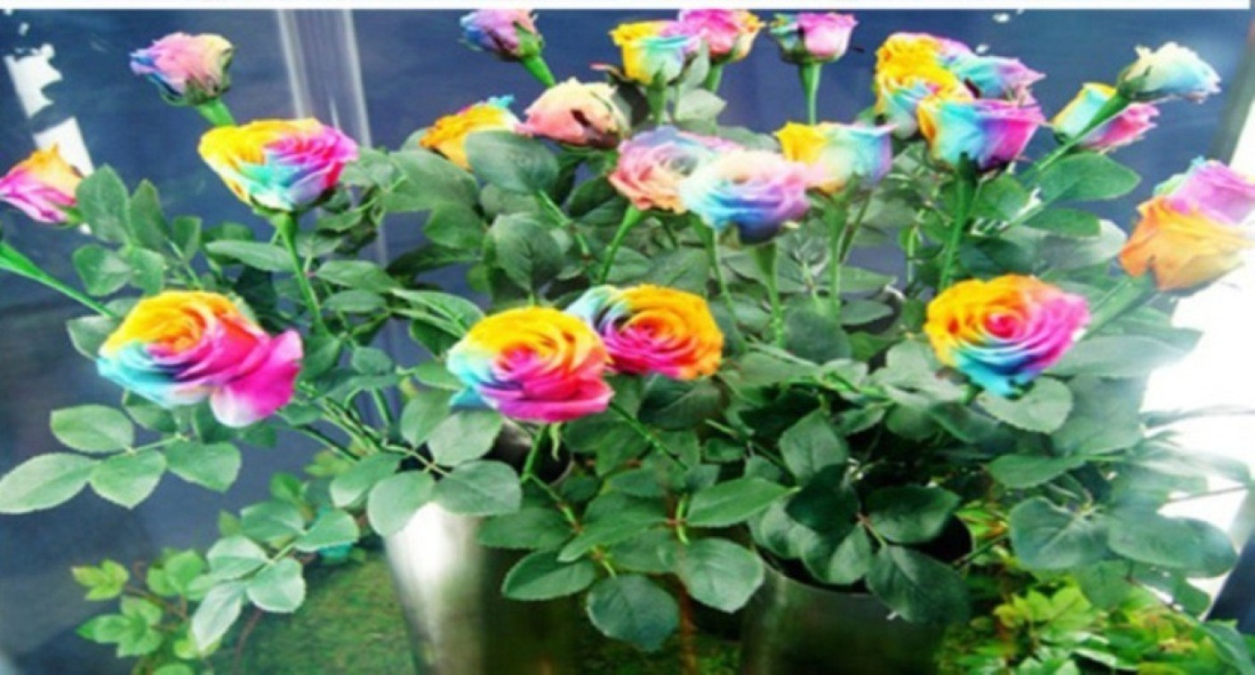 Priyathams rare holland rainbow rose flowers lover for Where can i buy rainbow roses in the uk