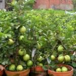 Plants Saplings
