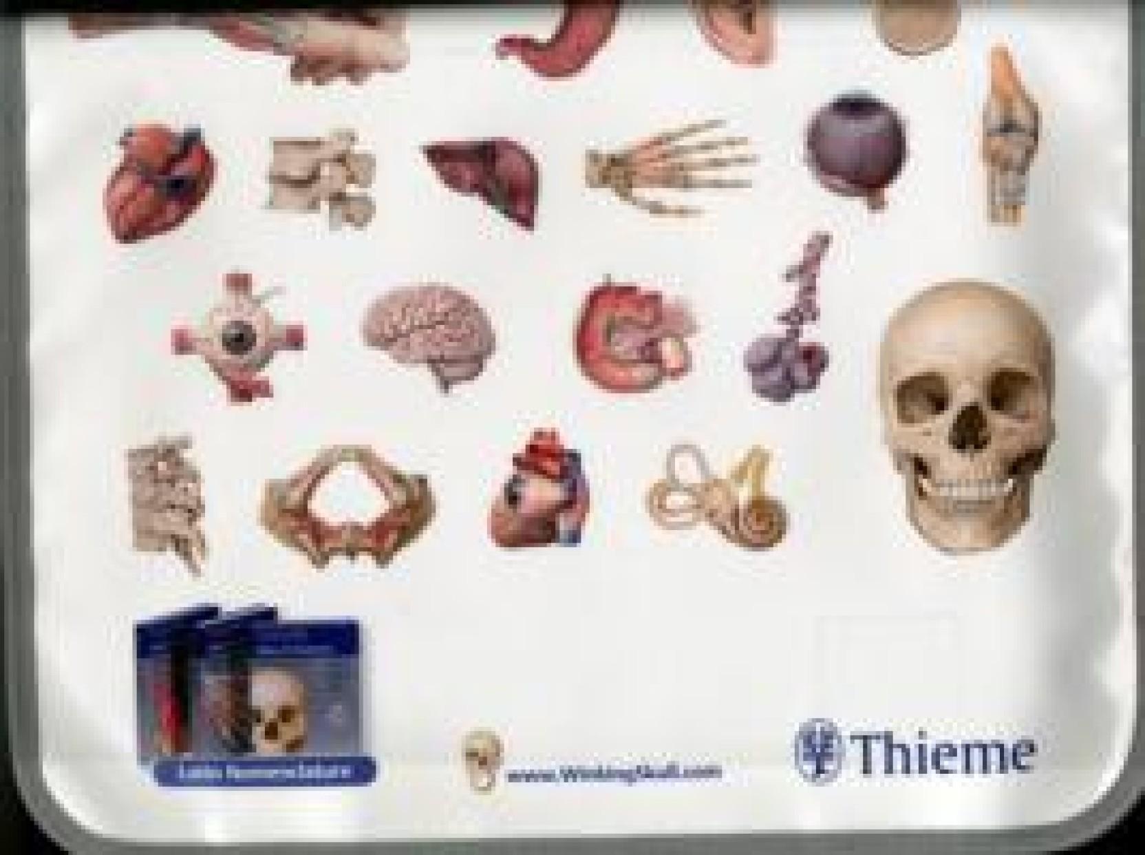 Thieme Atlas of Anatomy 3 Volume Set, Latin Nomenclature - Buy ...