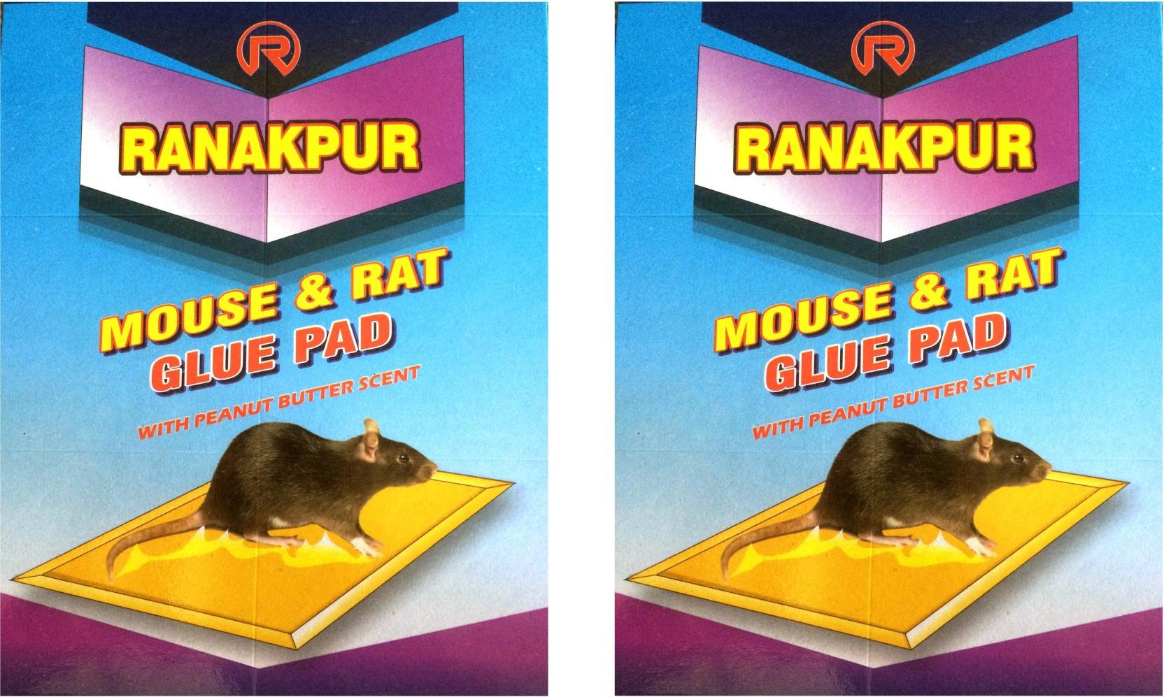 Ranakpur Mouse & Rat Trap with Peanut Butter Scent (Rat Catcher ...