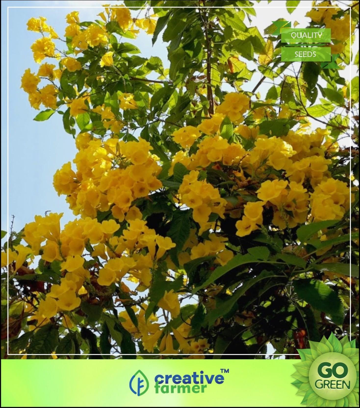 Creative Farmer Ornamental Tree Plants Stenolobium Stans Yellow
