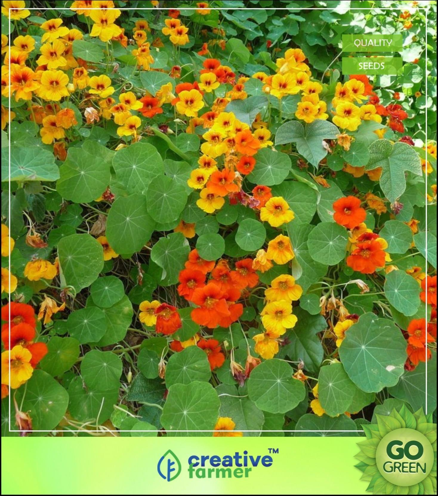 creative farmer nasturtium officinale garden seeds seed price in