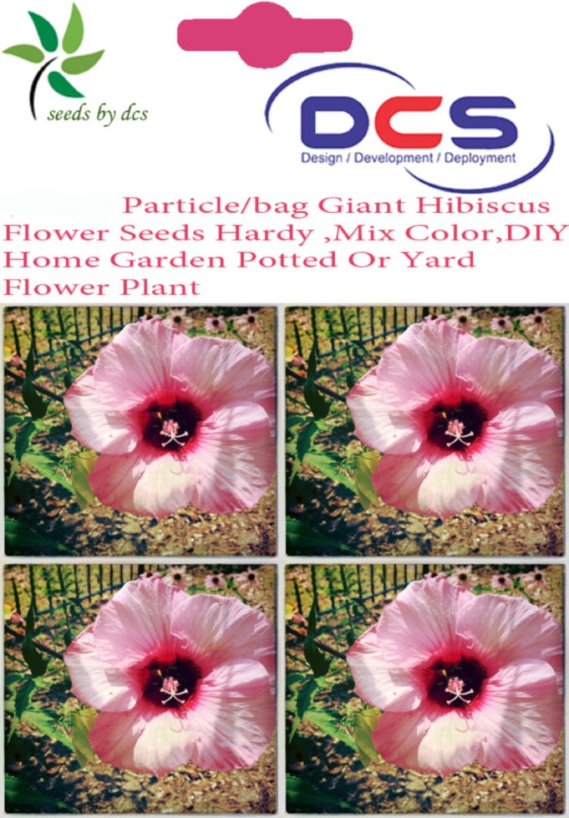 Dcs Giant Hibiscus Flower Seeds Seed Price In India Buy Dcs Giant