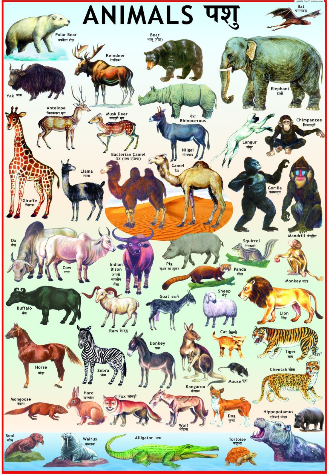 Animals Chart For Children Paper Print Children Posters