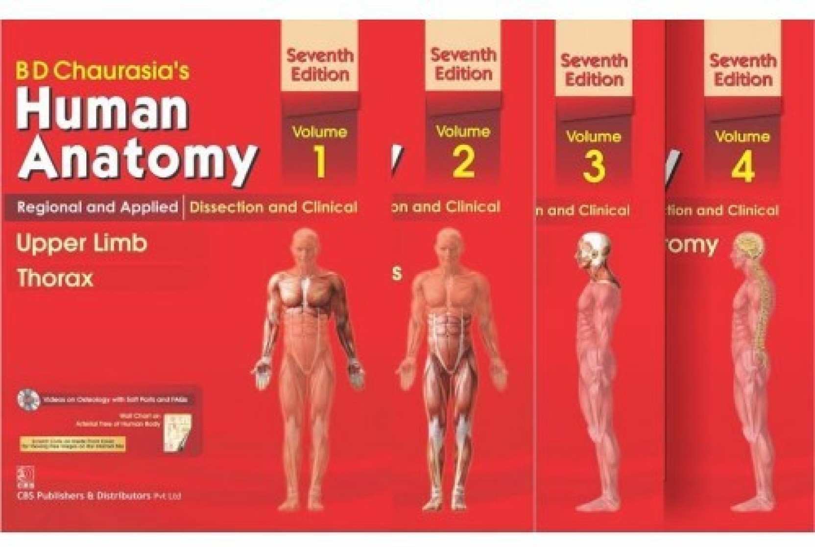 Human Anatomy By B D Chaurasia\'s 7th Edition(Set Of 4 Books) Vol-1,2 ...