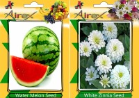 Airex Water Melon, White Zinnia Seed(15 per packet)