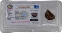 Buy Jewellery - Rudraksh online