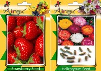 Airex Strawberry, Helichrysum Seed(25 per packet)