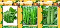Airex Spinach, Chilli, Bottle Gourd Seed(15 per packet)