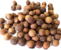 Blueline sandalwood 500Gms seeds (santalum album) Chandan seeds) Seed(3000 per packet)
