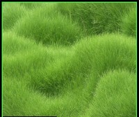 Generic GRASS SEEDS Seed(5000 per packet)