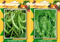 Airex Semphali and Lettuce Vegetables Seed (Pack Of 25 Seed * 2 Per Packet) Seed(25 per packet)