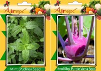 Airex Mint (Pudina) and Knol Khol Purple Viena Vegetables Seed (Pack Of 15 Seed * 2 Per Packet) Seed(15 per packet)