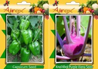 Airex Green Capsicum, Knol Khol Purple Viena Seed(15 per packet)