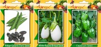 Airex Ridge Gourd, White Round Brinjal and Green Capsicum Vegetables Seed (Pack Of 15 Seed Ridge Gourd + 15 White Round Brinjal + 15 Green Capsicum Seed) Seed(15 per packet)