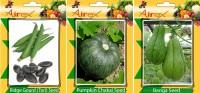 Airex Ridge Gourd, Pumpkin and Banga Vegetables Seed (Pack Of 15 Seed Ridge Gourd + 15 Pumpkin + 15 Banga Seed) Seed(15 per packet)