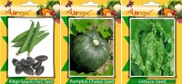 Airex Ridge Gourd, Pumpkin and Lettuce Vegetables Seed + Humic Acid Fertilizer (For Growth of All Plant and Better Responce) 15 gm Humic Acid +Pack Of 30 Seed Ridge Gourd + 30 Pumpkin + 30 Lettuce Seed Seed(30 per packet)