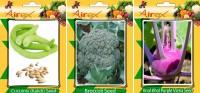 Airex Cucumis, Knol Khol Purple Viena and Broccoli Vegetables Seed (Pack Of 20 Seed Cucumis + 20 Knol Khol Purple Viena + 20 Broccoli Seed) Seed(20 per packet)