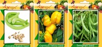 Airex Cucumis, Semphali and Capsicum Yellow Vegetables Seed (Pack Of 25 Seed Cucumis + 25 Semphali + 25 Capsicum Yellow Seed) Seed(25 per packet)