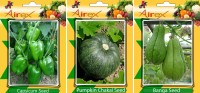 Airex Capsicum, Pumpkin and Banga Vegetables Seed (Pack Of 25 Seed Capsicum + 25 Pumpkin + 25 Banga Seed) Seed(25 per packet)