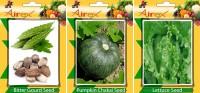 Airex Bitter Gourd, Lettuce, Pumpkin Vegetables Seed (Pack Of 20 Seed Bitter Gourd + 20 Lettuce + 20 Pumpkin Seed) Seed(20 per packet)