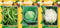 Airex Semphali, Cabbage, Cauliflower Vegetables Seed (Pack Of 15 Seed Semphali + 15 Cabbage + 15 Cauliflower Seed) Seed(15 per packet)