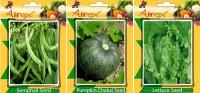 Airex Semphali, Pumpkin, Lettuce Vegetables Seed (Pack Of 20 Seed Semphali + 20 Pumpkin + 20 Lettuce Seed) Seed(20 per packet)