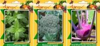 Airex Mint (Pudina), Broccoli, Knol Khol Purple Viena Vegetables Seed (Pack Of 15 Seed Mint (Pudina) + 15 Broccoli + 15 Knol Khol Purple Viena Seed) Seed(15 per packet)