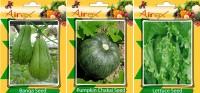 Airex Banga, Pumpkin, Lettuce Vegetables Seed (Pack Of 25 Seed Banga + 25 Pumpkin + 25 Lettuce Seed) Seed(25 per packet)