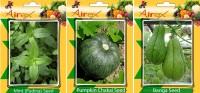 Airex Mint (Pudina), Pumpkin, Banga Vegetables Seed (Pack Of 25 Seed Mint (Pudina) + 25 Pumpkin + 25 Banga Seed) Seed(25 per packet)