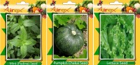 Airex Mint (Pudina), Pumpkin, Lettuce Vegetables Seed + Humic Acid Fertilizer (For Growth of All Plant and Better Responce) 15 gm Humic Acid + Pack Of 30 Seed Mint (Pudina) + 30 Pumpkin + 30 Lettuce Seed Seed(30 per packet)