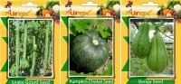 Airex Snake Gourd, Pumpkin, Banga Vegetables Seed (Pack Of 15 Seed Snake Gourd + 25 Pumpkin + 25 Banga Seed) Seed(25 per packet)