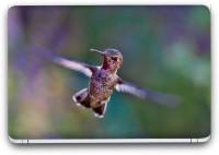 Flipkart SmartBuy Bird Flying Vinyl Laptop Skin (3M/Avery Vinyl, Matte Laminated, 14 x 9 inches) Vinyl Laptop Decal 14.1