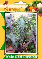 Airex Kale Red Russian (Hybrid) Seed (6 Packet Of Kale Red Russian) Seed (Pack of AVG 20-30 Seed * 6 Per Packet) Seed(180 per packet)