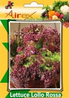 Airex Lettuce Lollo Rossa Seed (3 Packet Of Lettuce Lollo Rossa Seed (Pack of AVG 50 - 100 Seed * 3 Per Packet) Seed(300 per packet)