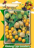 Airex Alkekengi Cape Gooseberry Summer Fruit Seed (1 Packet Of Alkekengi Cape Gooseberry) Pack Of 10 Seed * 1 Per Packet Seed(10 per packet)