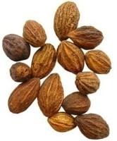 Generic 25 Seeds of Rare & Precious Terminalia Chebula Chebulic Myrobalan Haritaki Kadukka Tree Seed(25 per packet)