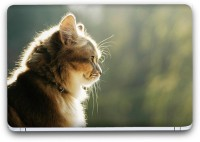 Flipkart SmartBuy Cute Cat Vinyl Laptop Skin (Avery Vinyl, Matte Laminated, 14 x 9 inches) Vinyl Laptop Decal 14.1