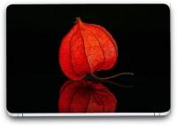 Flipkart SmartBuy Stunning Flower 2 Vinyl Laptop Skin (3M/Avery Vinyl, Matte Laminated, 13 x 8.5 inches) Vinyl Laptop Decal 13.3