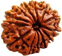 Mithila 13 Mukhi Rudraksha Indian 100% Original & Lab Certified Rudraksh For Men & Women Wood Pendant