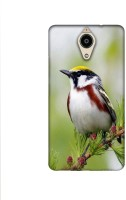 Casotec Bird Pattern Design Printed Silicon Soft TPU Back Case Cover for Panasonic Eluga Ray Max