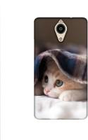Casotec Sleepy Kitten Design Printed Silicon Soft TPU Back Case Cover for Panasonic Eluga Ray Max