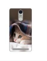 Casotec Sleepy Kitten Design 3D Printed Hard Back Case Cover for Lenovo K5 Note