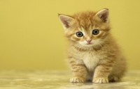 View PrintMart Cute Cat Vinyl Laptop Decal 15.6 Laptop Accessories Price Online(PrintMart)