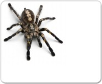 View Allthingscustomized Spider Mousepad(Multicolor) Laptop Accessories Price Online(Allthingscustomized)