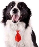 Futaba Pet Grooming Necktie - Red Plain Dog Collar Charm(Red, Other)